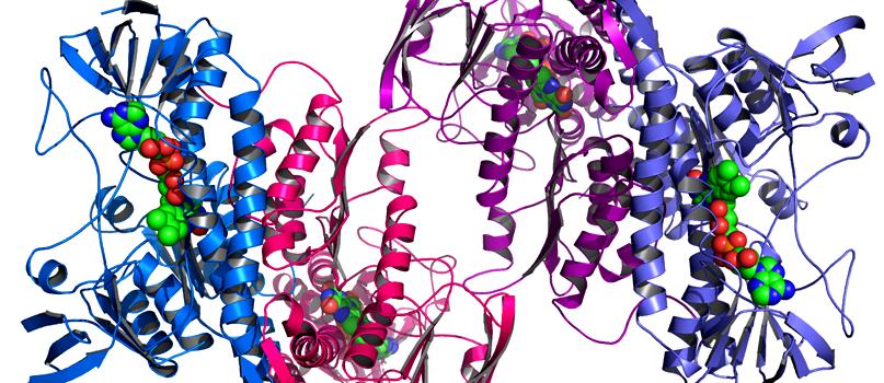 Saiba tudo sobre proteína | Chill Out, o seu clube de saúde